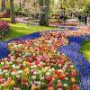 Cận cảnh vườn hoa đẹp nhất thế giới ở Hà Lan