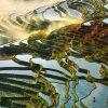 Choáng ngợp trước vẻ đẹp của ruộng bậc Yuanyang ở Trung Quốc