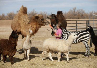 Nam Nevada – thế giới động vật thu nhỏ ở thành phố Las Vegas