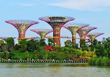 """Thú vị: Vườn """"siêu cây"""" năng lượng mặt trời tại Singapore"""