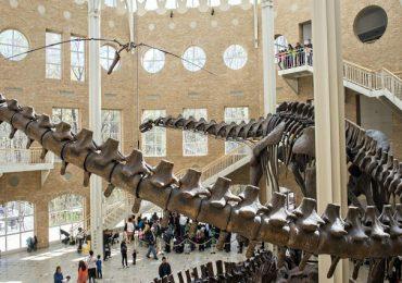 Thưởng lãm 3 bảo tàng khủng long hàng đầu tại Mỹ