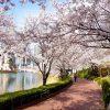 Top 4 địa điểm ngắm hoa anh đào đẹp nhất ở Seoul