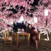 Loạn tim với vườn hoa anh đào tuyệt đẹp ở Hội An, Quảng Nam