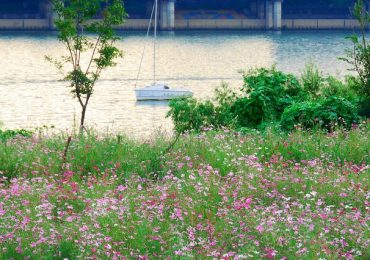 Bỏ túi 3 địa điểm ngắm sông Hàn đẹp nhất Seoul