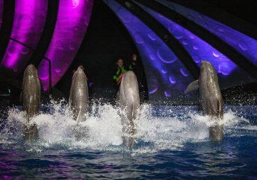 Khám phá thủy cung lớn nhất ở Atlanta – Georgia Aquarium
